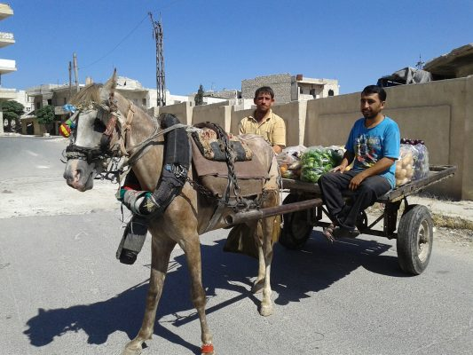 Horse carts to transport passengers and sell vegetables on the streets of Maarrat al-Nu'man. Photo by: Sonia al-Ali