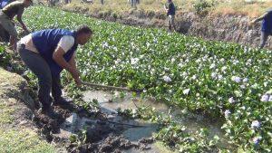 استئصال نبتة زهرة النيل وفر العمل لـ 1600عامل