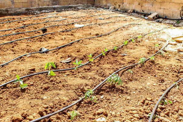وبات الأهالي يزرعون حدائق منازلهم في ريف إدلب تصوير دارين الحسن